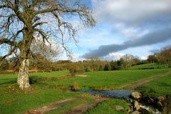 Herfst Weiden stock afbeeldingen