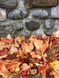 herfstachtergrond Stock Foto's