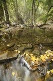 Herfstbladeren bij Andarax-rivier Stock Foto's