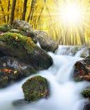 Herfstbos met bergkreek Stock Afbeeldingen