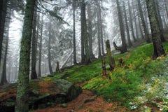 Herfstbos met sparrenstenen en mos na eerste sneeuw Royalty-vrije Stock Fotografie