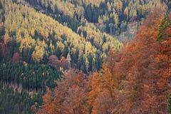 Herfstbos in verschillende kleuren Royalty-vrije Stock Fotografie