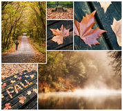 Herfstcollage van Fragas do Eume narural park Stock Afbeeldingen