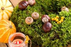 Herfstdecoratie - moskroon en pompoenen Royalty-vrije Stock Afbeelding