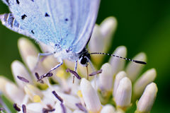 Herfstdraad-gevleugelde vlinder Royalty-vrije Stock Foto