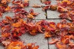 Herfstesdoornbladeren op cobbelstone in de straat stock fotografie