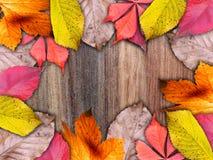 Herfstkader met kleurrijke bladeren Stock Fotografie
