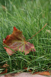 Herfstkleuren Royalty-vrije Stock Fotografie