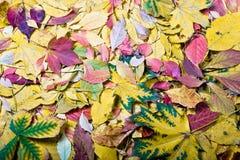 Herfstkleuren Royalty-vrije Stock Foto