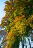 Herfstkleuren in het park Royalty-vrije Stock Afbeeldingen