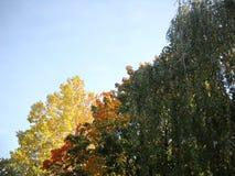 Herfstkleuren van geel aan rood en groen Stock Foto's