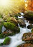 Herfstlandschap met bergkreek Stock Foto