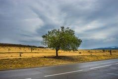 Herfstlandschap van Kakheti-gebied Stock Afbeeldingen