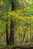 Herfstlandschap van natuurlijk bos die met dode bomen liggen Royalty-vrije Stock Fotografie
