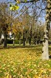 Herfstpark met gras, bomen, gele en rode bladeren en blauw Stock Foto