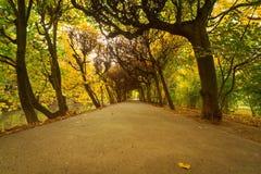 Herfstparksteeg Stock Afbeeldingen