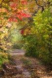Herfstparksteeg, de kleurrijke herfst Stock Foto's
