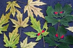 Herfstpatroon in Halloween-stijl - esdoornbladeren in de vorm van kwade gezichten met rode ogen op een zwarte achtergrond Stock Foto