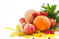 Herfstpompoenen, appelen en ashberry met dalingsbladeren Stock Afbeelding