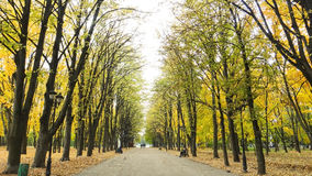 Herfstscène met gele en groene bladeren op de bomen en fal Royalty-vrije Stock Fotografie