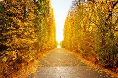Herfststeeg in het park van Gdansk Royalty-vrije Stock Afbeeldingen