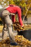 Herfsttijd in tuin Stock Fotografie
