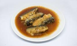 Heringe fischen Tomatensauce auf Weiß stockfotos