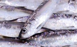 Heringfischhintergrund Stockfotos