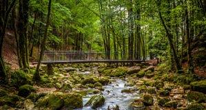 Herisson Fluss Stockbild