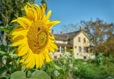Heritage Farmhouse, Delta, BC Stock Photo