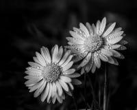Hermana dos bajo la lluvia imagenes de archivo