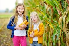 Hermanas adorables que juegan en un campo de maíz en día hermoso del otoño Niños bonitos que sostienen mazorcas del maíz Cosecha  Fotografía de archivo libre de regalías