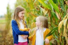 Hermanas adorables que juegan en un campo de maíz en día hermoso del otoño Niños bonitos que sostienen mazorcas del maíz Cosecha  Foto de archivo libre de regalías