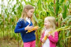 Hermanas adorables que juegan en un campo de maíz en día hermoso del otoño Niños bonitos que sostienen mazorcas del maíz Cosecha  Imagen de archivo