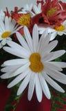 hermane Foto de archivo libre de regalías