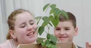 Hermano joven feliz y hermana sonrientes que admiran una planta frondosa verde que acaban de trasplantar en una caja de madera almacen de metraje de vídeo
