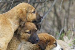 Hermanos del perrito imagenes de archivo