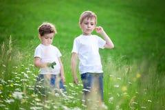 Hermanos jovenes en campo Fotografía de archivo libre de regalías