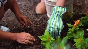 Hermanos que cultivan un huerto y que plantan las flores en jardín almacen de metraje de vídeo