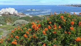 Hermanus, South Africa. Walk the Cliff Path to Grotto Beach and enjoy the view. Hermanus, South Africa. Walk the Cliff Path to Grotto Beach and enjoy the Royalty Free Stock Photo