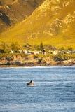 Hermanus Whale Watching royalty-vrije stock afbeeldingen