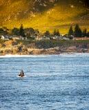 Hermanus Whale Watching stock fotografie
