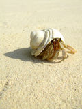 Hermit crab. Hermis crab on the beach in Andaman sea Royalty Free Stock Image