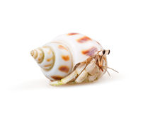 Hermit Crab Royalty Free Stock Image