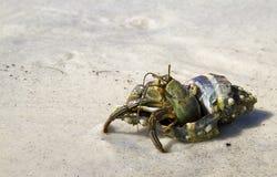 Hermit Crab. On the white sang beach of Ocaloosa Island stock photos