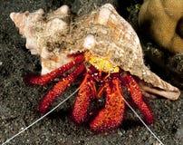 Hermit crab Stock Image