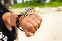 Hermit crab also known as Paguroidea in shell Royalty Free Stock Photo