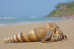 Hermit crab on the beach Royalty Free Stock Photos