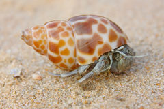 Hermit crab on the beach Stock Photos