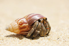 Hermit Crab on a beach Stock Photos